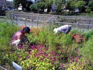 鍛冶橋側花壇の草取り