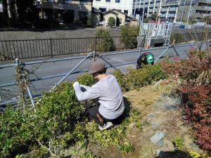 学生は学生エリア植栽の剪定