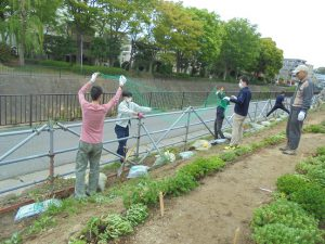 鉄パイプ柵にネットを張りテイカカズラを誘引しました