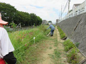 鍛冶橋側園路の草取り