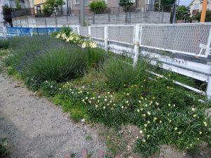 鍛冶橋口に咲く花