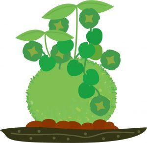 苔玉作りワークショップ 苔玉の作り方