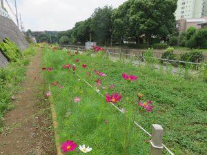 5お花畑 (2)