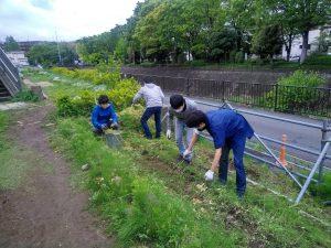 都市緑化研の学生が抜き取ったナノハナをきざんで堆肥化
