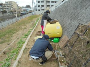 ツルマンネン草ユニットの除草作業