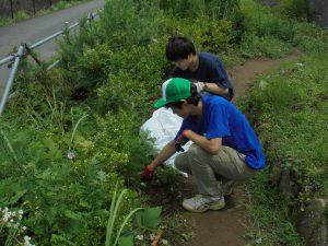学生エリア内園路の草取り
