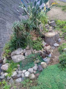 学生がサボテンアリアの雑草取りをしました