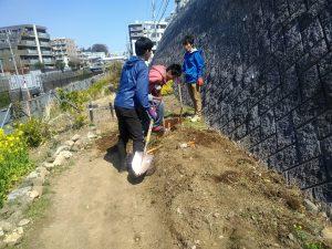 園路の拡張しヤマブキ植え