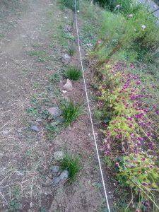 鍛冶橋側花壇にもムスカリの球根を植えました