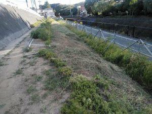8月21日、業者草刈り後の鍛冶橋側