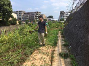 ヒマワリを植える前に草取りを行いました