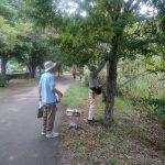 散策サークルと協力し、樹名板の取り付け
