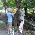 くさぶえのみちの木に樹名板が取り付け