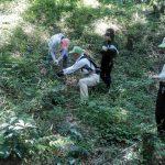 中学生も参加して野草の生育調査