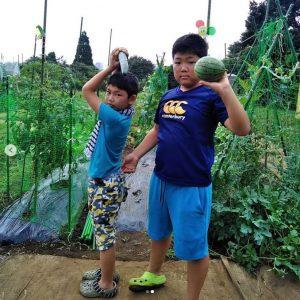スイカ、きゅうり(育ちすぎてオバケきゅうりに)、ミニトマト、枝豆を収穫!畑は中川駅から歩いて20分ほどの高台にありますよ②