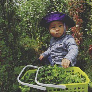 パクチーが収穫できる中川駅徒歩5分の素敵な畑