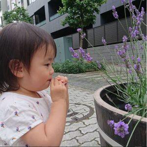 中川の「花と緑の村が散歩道」にあるラベンダー、いい香りに誘われてパクり(笑)