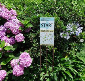 中川は、都筑区自慢の総延長15kmの緑道のスタート地点です。その入口を飾る花壇では、今日は紫陽花とアガパンサスが咲いていました。