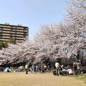 山崎公園でのお花見☆満開日は大盛況