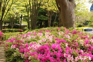 緑道沿いの花々2