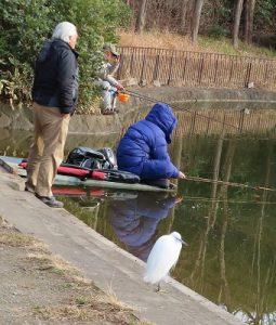 釣り人になじんでいる、これはコサギ?