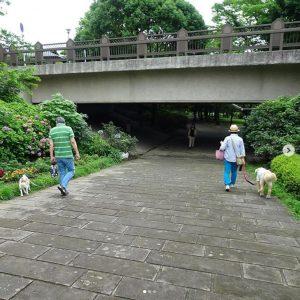 雨上がりの涼しい朝は、お散歩を楽しみにしていたワンちゃんたちがゆったりお散歩しています。