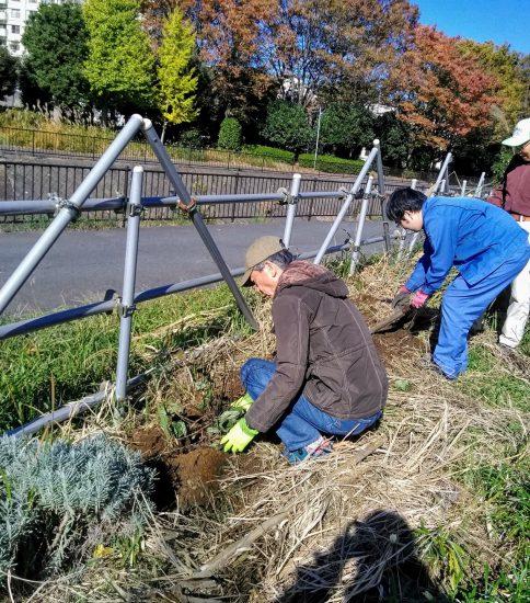【HRG】2019年11月20日(水) 春に向けて多年草植え付けと種まき実施