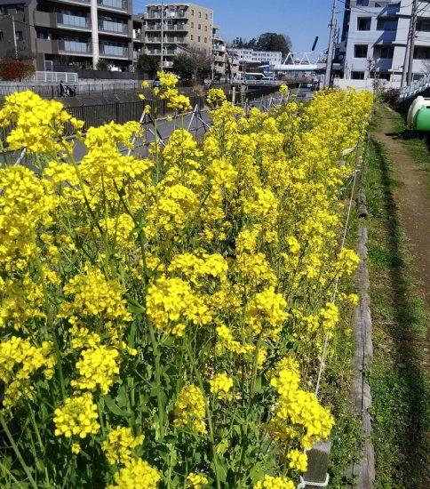 【HRG】2020年3月18日(水)初春の花が一杯の中で自主作業