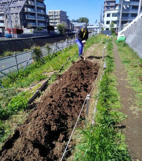 【HRG】2020年4月15日(水)コロナ対策の分散作業で夏花の準備