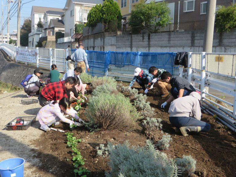 2016年11月 市民参加で花苗植え