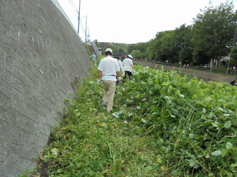 2016年9月 雑草に覆われた敷地