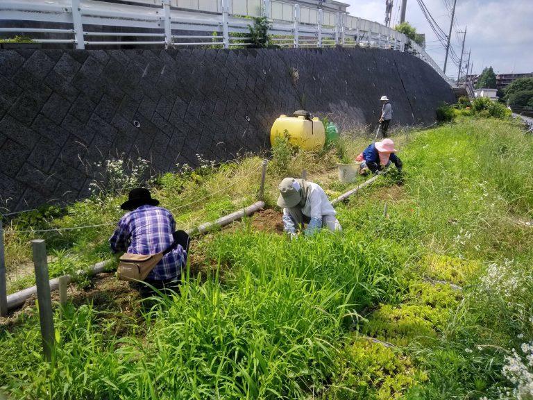 2019年夏 花壇の雑草取り