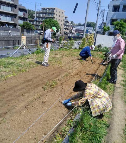 【HRG】2020年5月2日(土)センニチコウとコスモスの種まき