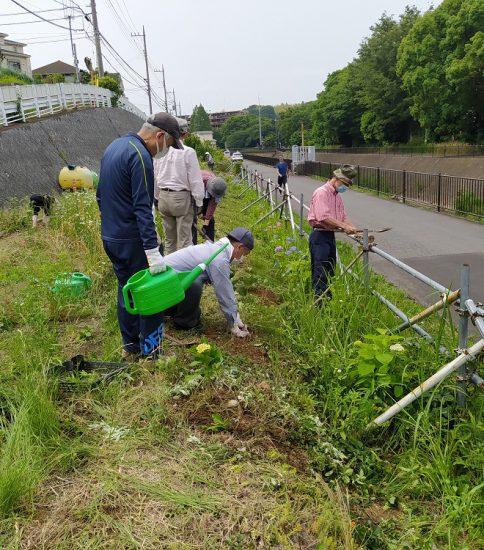 【HRG】2020年6月6日(土)アジサイ、ブルーベリーの苗を植えました