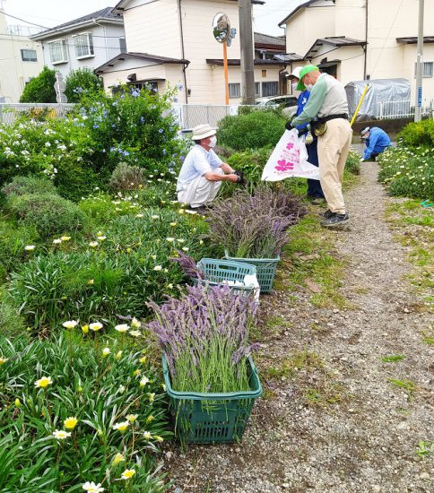 【HRG】2020年7月5日(日)ラベンダーの収穫と1年草の植替え