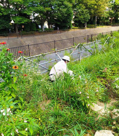 【HRG】2020年9月5日(土)残暑の中で草取りと草刈り