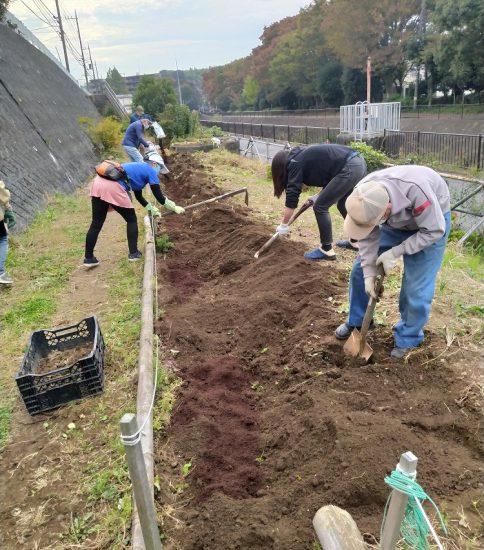 【HRG】2020年11月7日(土)来春に備え菜の花などの種まき準備