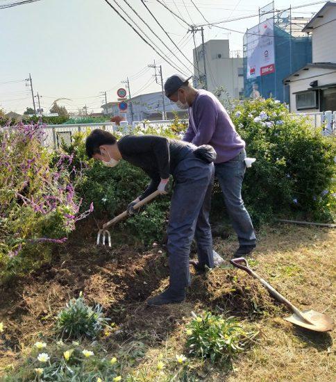 【HRG】2020年11月18日(水)菜の花等の種まき、春咲き球根の植え込み