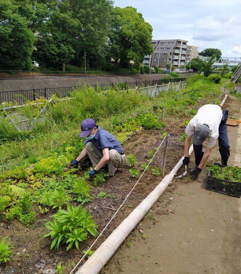 【HRG】2021年6月20日(日) 有志で園路花壇の草取りと植替え