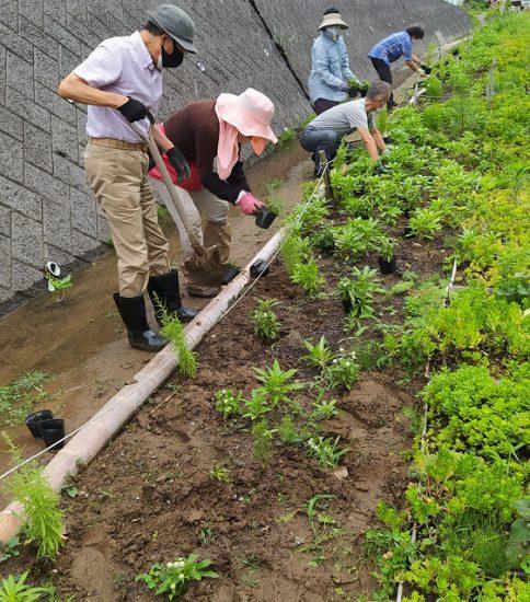 【HRG】2021年7月3日(土) 梅雨の合間に花苗植え