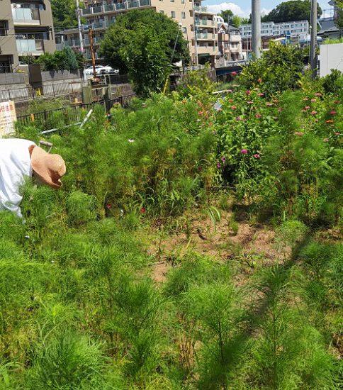 【HRG】2021年7月21日(水) 真夏日に雑草との闘い